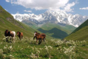 Flora and Fauna Georgia Caucasus