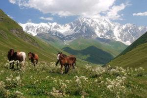 Flora and Fauna Georgia Caucasus