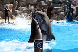 الدلافين في باتومي