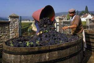 Georgian wine tour package 8 days