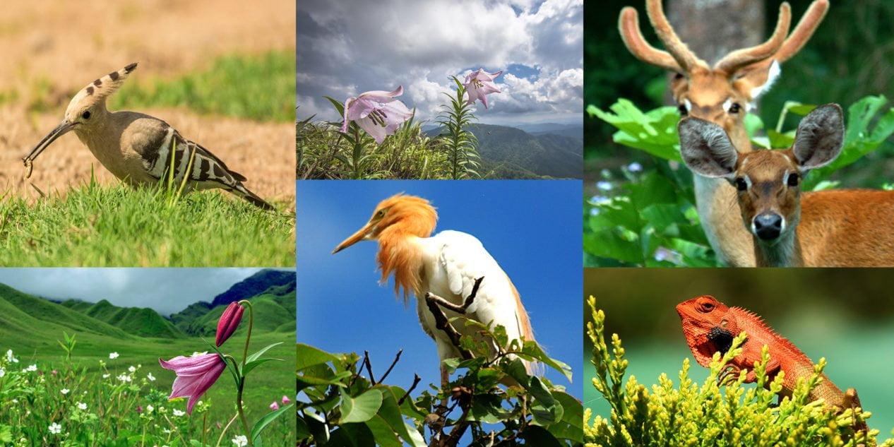 Flora and Fauna / Georgia Caucasus