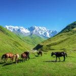 جبال أشجولي شخارا طبيعة سفانيتي الخلابة
