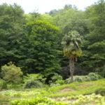 طبيعة باتومي زيارات عالمية