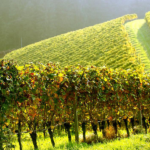 Wine tour Romantic Travel tourism agency